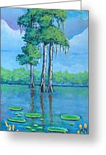 Louisiana Cypress Greeting Card
