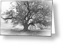 Louisiana Dreamin' Monochrome Greeting Card