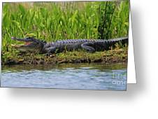 Louisiana Gator Greeting Card