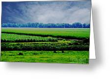 Louisiana Greenway Greeting Card