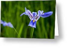 Louisiana Swamp Beauties Greeting Card