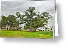 Louisiana Winter 2 Greeting Card