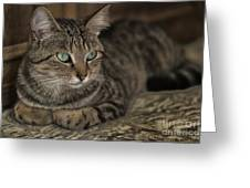 Lounging Cat Greeting Card