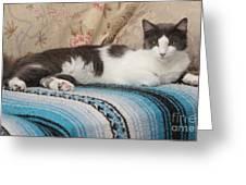 Lounging Cat Greeting Card