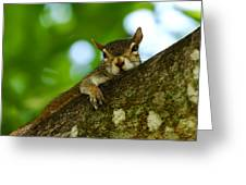Lounging Squirrel Greeting Card