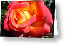 Love And Peace Rose Greeting Card
