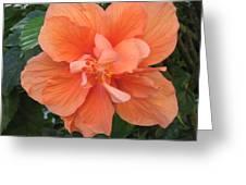 Love Flowers 3 Greeting Card
