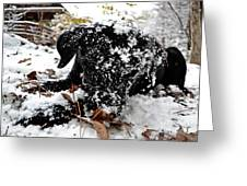 Love Lab Snow 4 Greeting Card