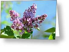 Love My Lilacs Greeting Card