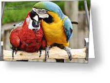 Love Parrotts Greeting Card