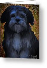 Love Puppies Greeting Card by Katherine Williams
