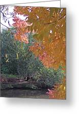 Lovely Autumn Colors Greeting Card