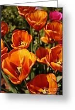 Lovely Burnt Orange Tulips Greeting Card