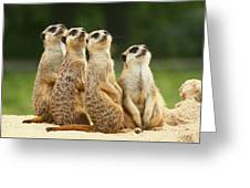 Lovely Group Of Meerkats Greeting Card