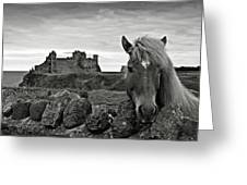 Lovely Horse And Tantallon Castle Greeting Card