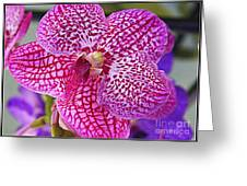 Orchid Lovely In Pink And White Greeting Card