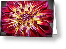 Lovely In Purple And Red - Dahlia Greeting Card