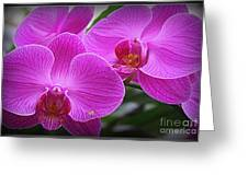 Lovely In Purple - Orchids Greeting Card