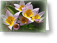 Lovely In White And Yellow - Tulips Greeting Card