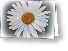 Lovely In White - Daisy Greeting Card