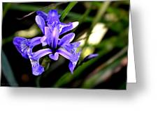 Lovely Iris Greeting Card