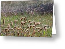 Lovely Layers Of Grass Greeting Card