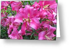Lovely Lilies  Greeting Card