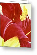 Lovely Lily Floral Print Greeting Card