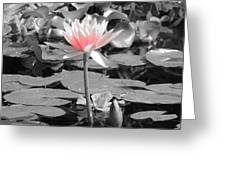 Lovely Lily Greeting Card