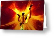 Lovely Lily Stargazer Greeting Card