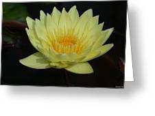 Lovely Lotus Greeting Card