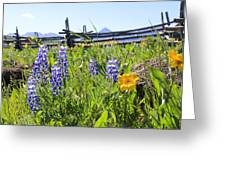 Lovely Lupine Greeting Card