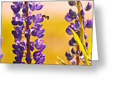 Lovely Lupins And Busy Bee Greeting Card