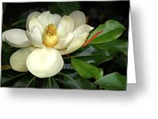 Lovely Magnolia Greeting Card