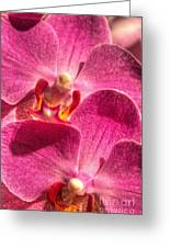 Lovely Orchid Greeting Card
