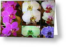 Lovely Orchids - A Collage Greeting Card