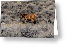Lovely Sorrel Wild Horse In Western Nevada Greeting Card