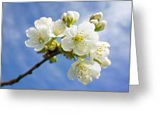 Lovely White Apple Blossoms On Branch Greeting Card