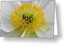 Lovely White Flower Square Greeting Card