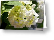 Lovely White Hydrangea Greeting Card