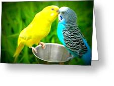 Lover Birds Greeting Card