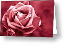 Lovers Rose Greeting Card