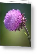 Loving Lavender Greeting Card
