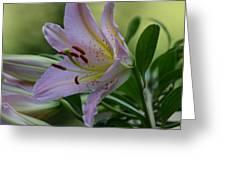 Loving Lilies Greeting Card