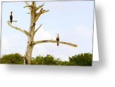 Low Angle View Of Cormorants Greeting Card