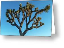 Low Angle View Of Joshua Tree, Joshua Greeting Card