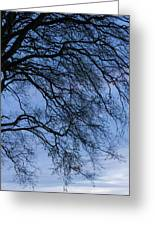 Low Angle View Of Tree At Dawn, Dark Greeting Card