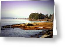 Low Tide Revelations Greeting Card