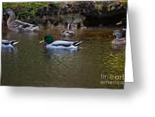 Lowcountry Duck Gathering Greeting Card