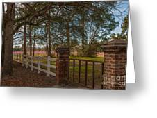 Lowcountry Gates To Boone Hall Plantation Greeting Card